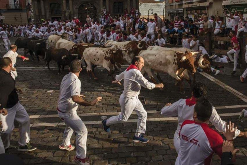 Mơ thấy bị bò rượt đuổi đánh con gì nhanh chóng rước tài lộc? 760587522