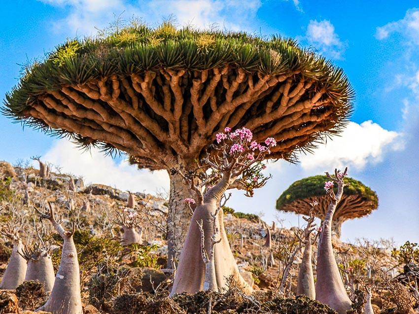 Những hòn đảo kỳ quái nhất trên trái đất - 1