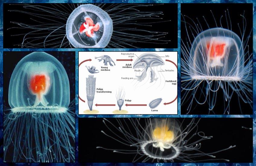 Những sinh vật sở hữu khả năng thích nghi siêu việt nhất - 4