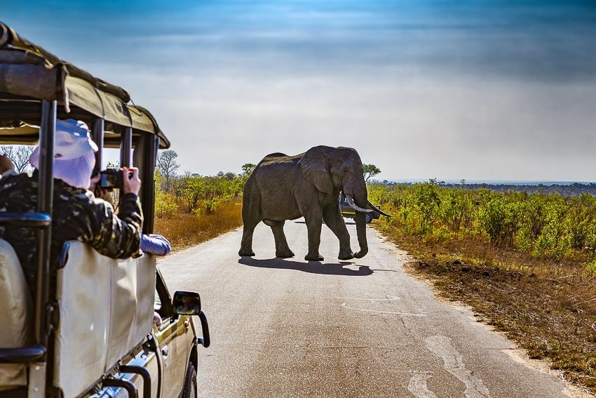 Tour du lịch ngắm hoa phượng tím ở Nam Phi và Úc 7