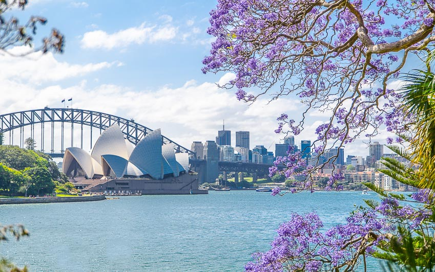 Tour du lịch ngắm hoa phượng tím ở Nam Phi và Úc 4