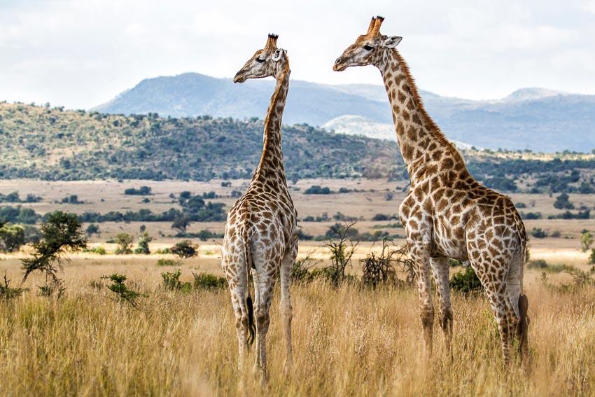 Tour du lịch ngắm hoa phượng tím ở Nam Phi và Úc 3