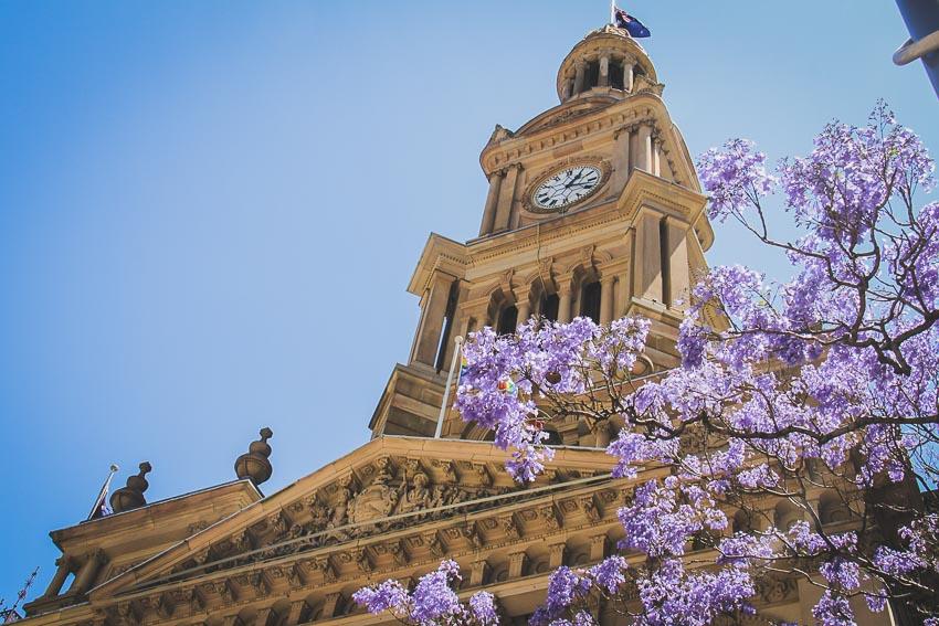 Tour du lịch ngắm hoa phượng tím ở Nam Phi và Úc 2