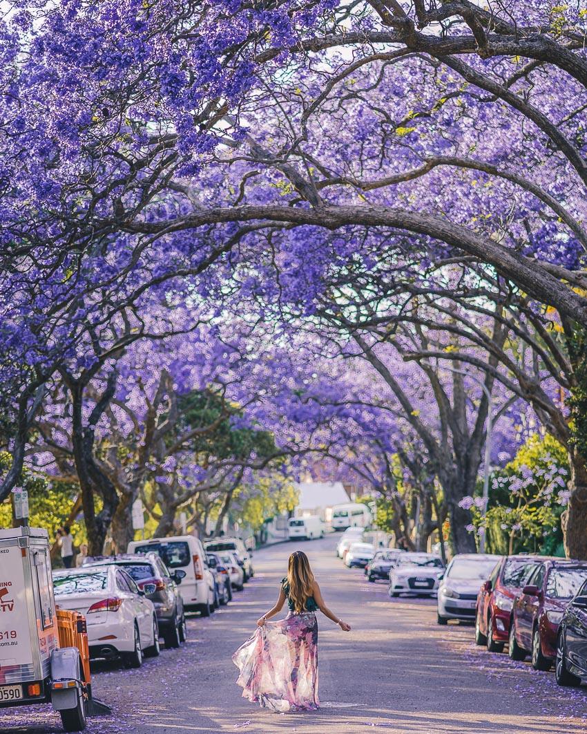 Tour du lịch ngắm hoa phượng tím ở Nam Phi và Úc 1