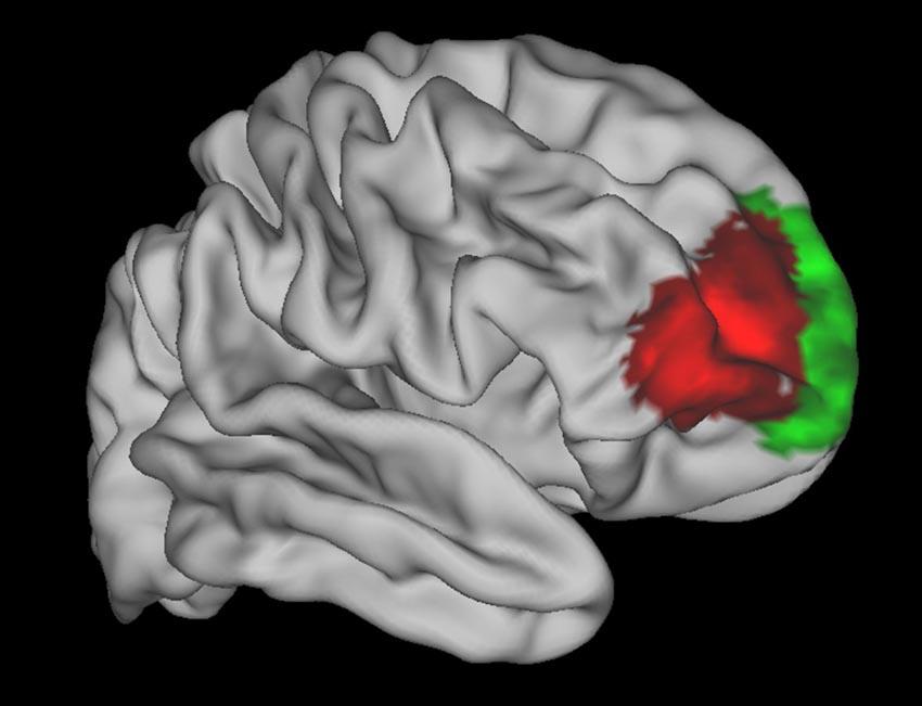 Tìm thấy vùng não liên quan đến việc đưa ra quyết định - 1