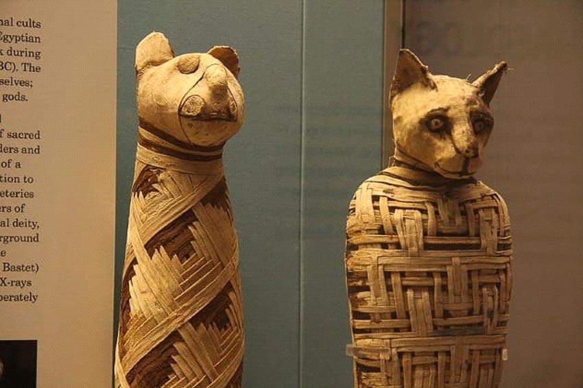 Những điều có thể bạn chưa biết về xác ướp Ai Cập thời cổ đại - 3