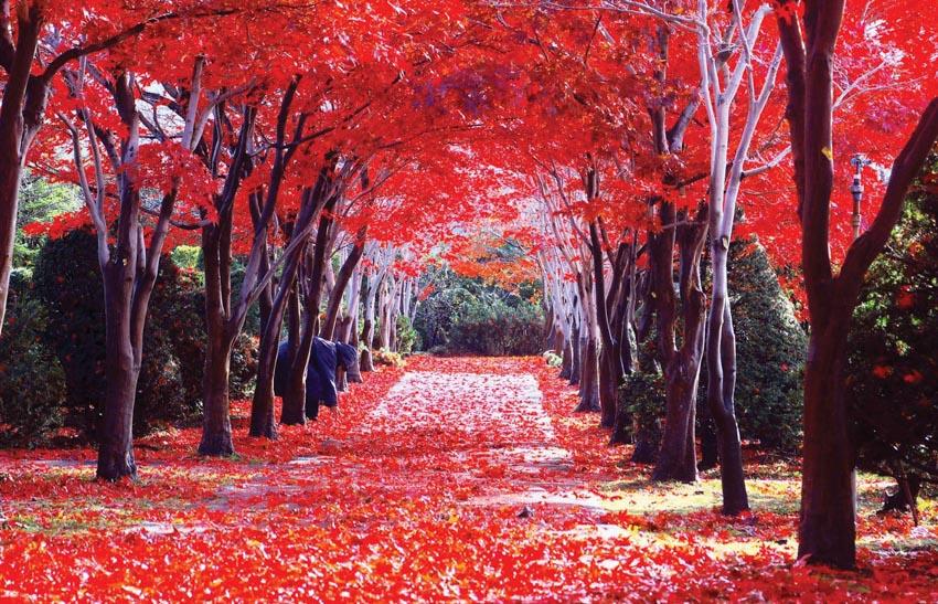 Nơi nào đón mùa thu sớm nhất tại Nhật Bản? - 10