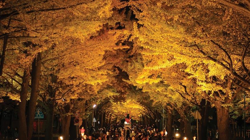 Nơi nào đón mùa thu sớm nhất tại Nhật Bản? - 7