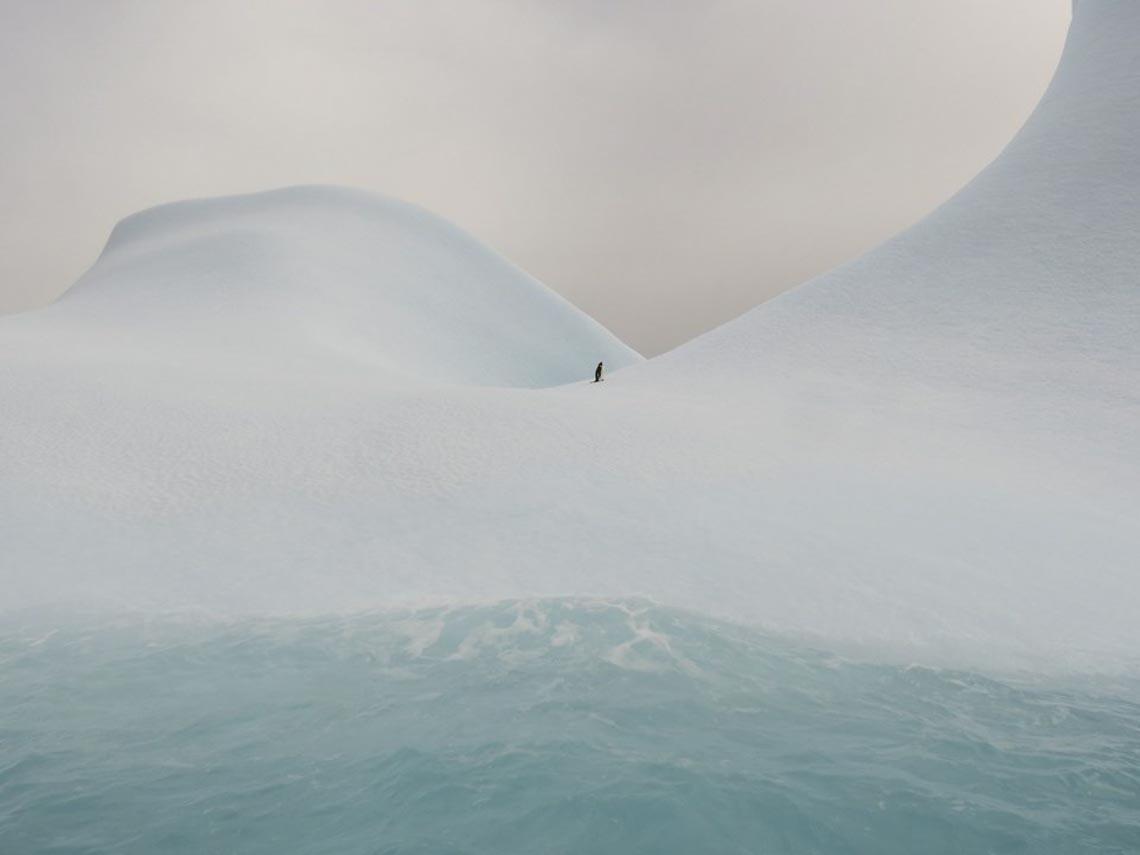 30 bức ảnh đoạt giải thưởng Bảo tồn thiên nhiên thế giới 2019 khiến bạn mê mẩn - 21