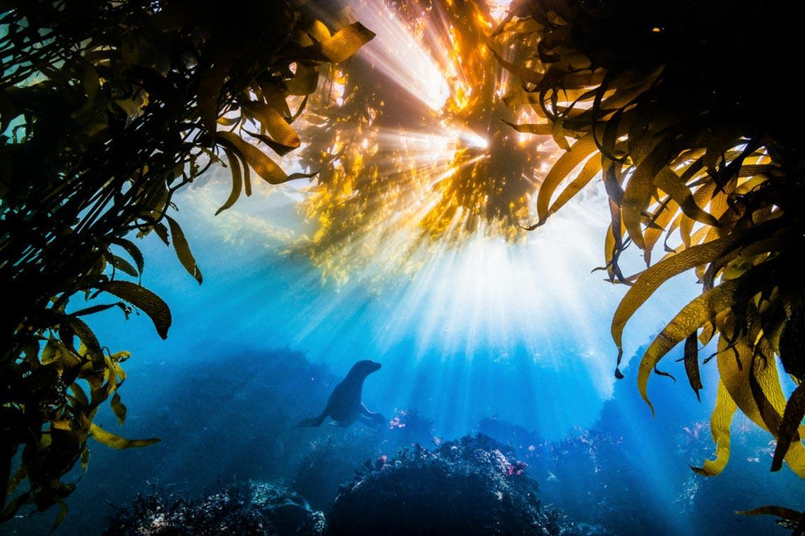 30 bức ảnh đoạt giải thưởng Bảo tồn thiên nhiên thế giới 2019 khiến bạn mê mẩn - 30