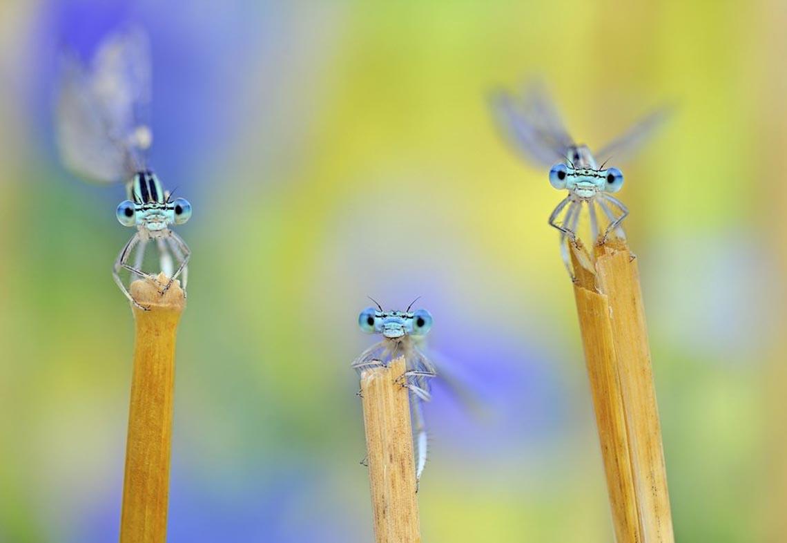 30 bức ảnh đoạt giải thưởng Bảo tồn thiên nhiên thế giới 2019 khiến bạn mê mẩn - 6
