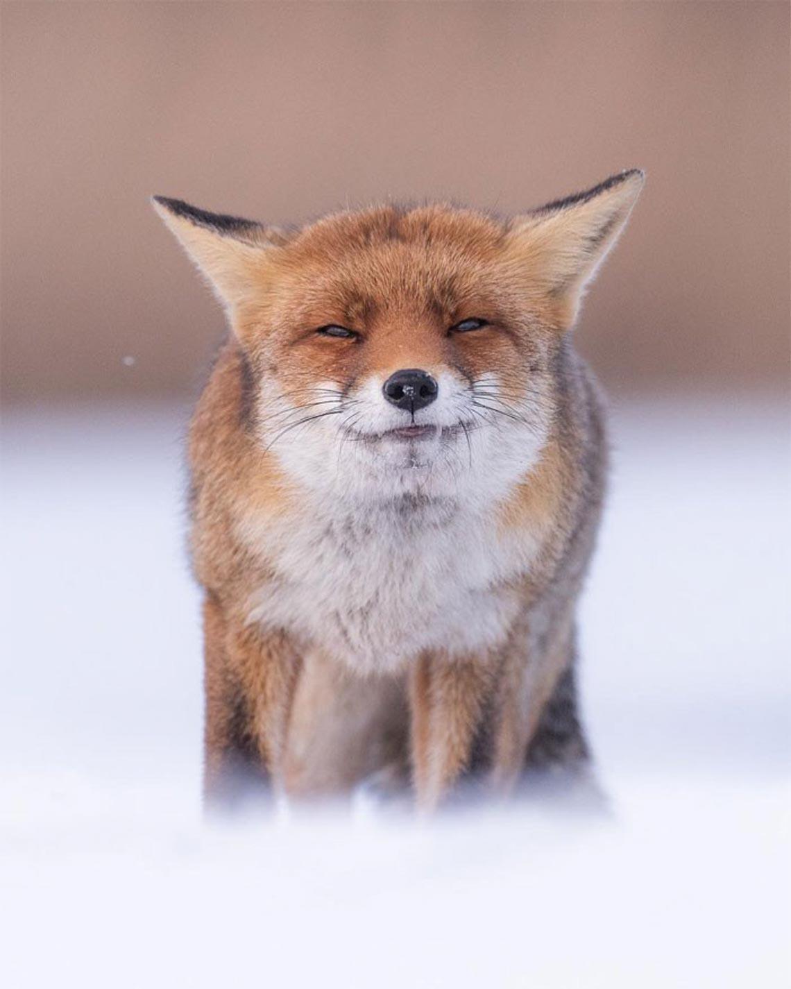"""Khoảnh khắc """"siêu dễ thương"""" của động vật khi không có ai xung quanh - 4"""