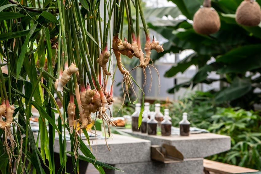 Không gian ẩm thực The Spice Garden - 5