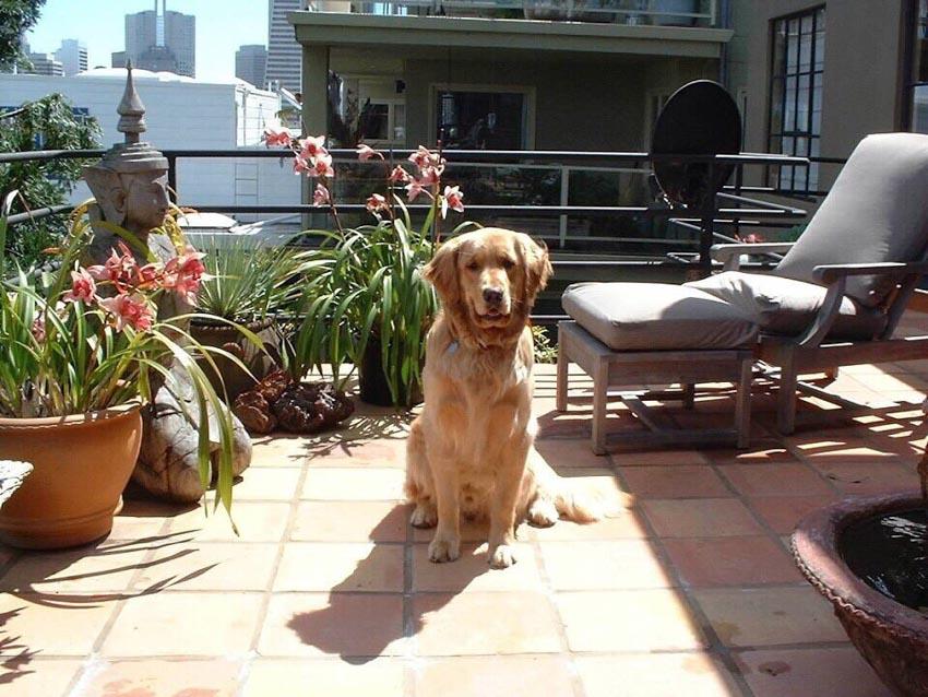 Những chú chó cưng của các CEO ở thung lũng Silicon - 10