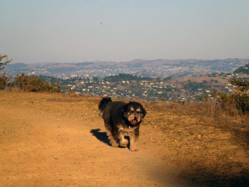 Những chú chó cưng của các CEO ở thung lũng Silicon - 18