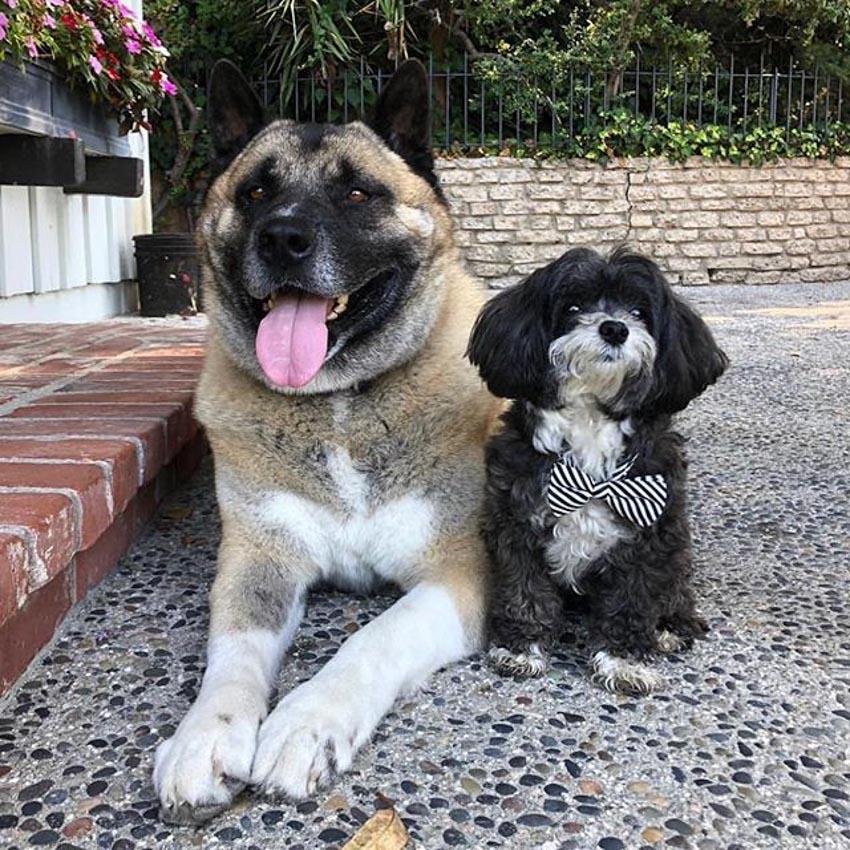 Những chú chó cưng của các CEO ở thung lũng Silicon - 30