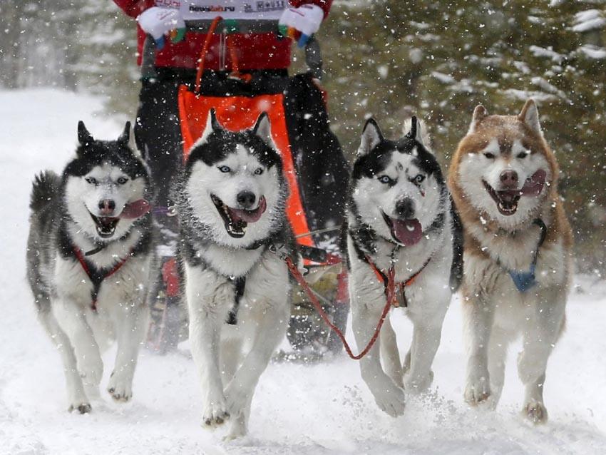 Những chú chó cưng của các CEO ở thung lũng Silicon - 31