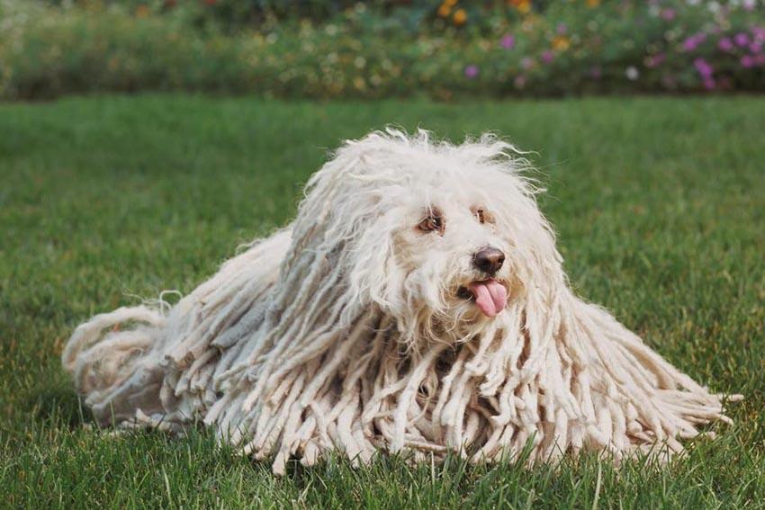 Những chú chó cưng của các CEO ở thung lũng Silicon - 5