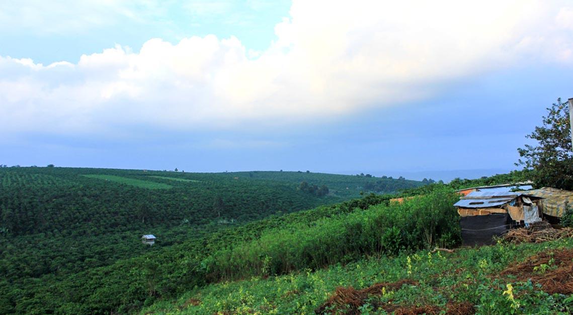 Nên thơ và khoáng đạt rừng núi Di Linh - 10
