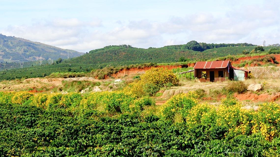 Nên thơ và khoáng đạt rừng núi Di Linh - 12