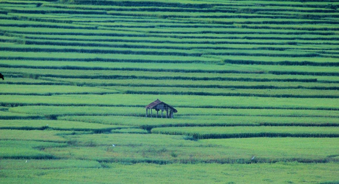Nên thơ và khoáng đạt rừng núi Di Linh - 16