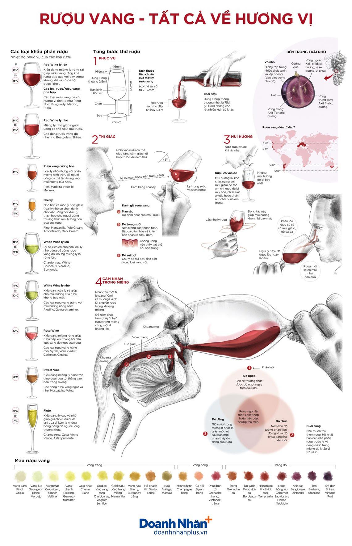 Rượu vang - tất cả về hương vị -1