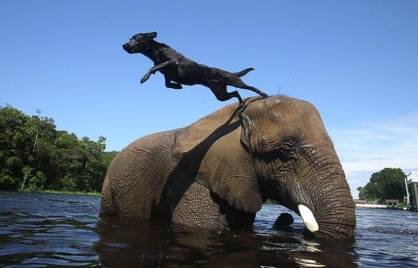 Ảnh vui: Tình bạn voi và chó - 2