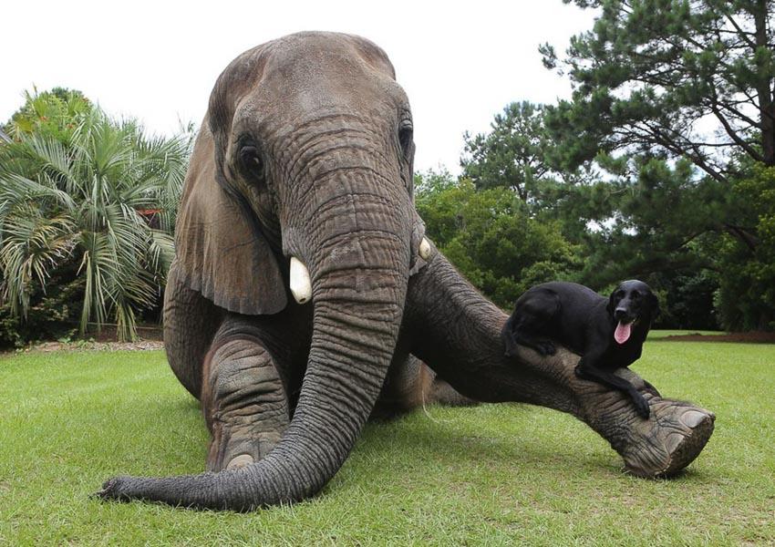 Ảnh vui: Tình bạn voi và chó - 4