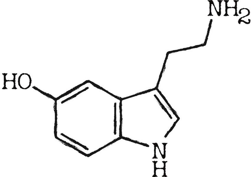 Biện pháp tự nhiên giúp cân bằng hóa chất não bộ - 3