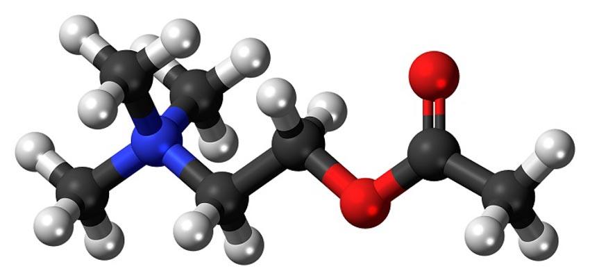 Biện pháp tự nhiên giúp cân bằng hóa chất não bộ - 8