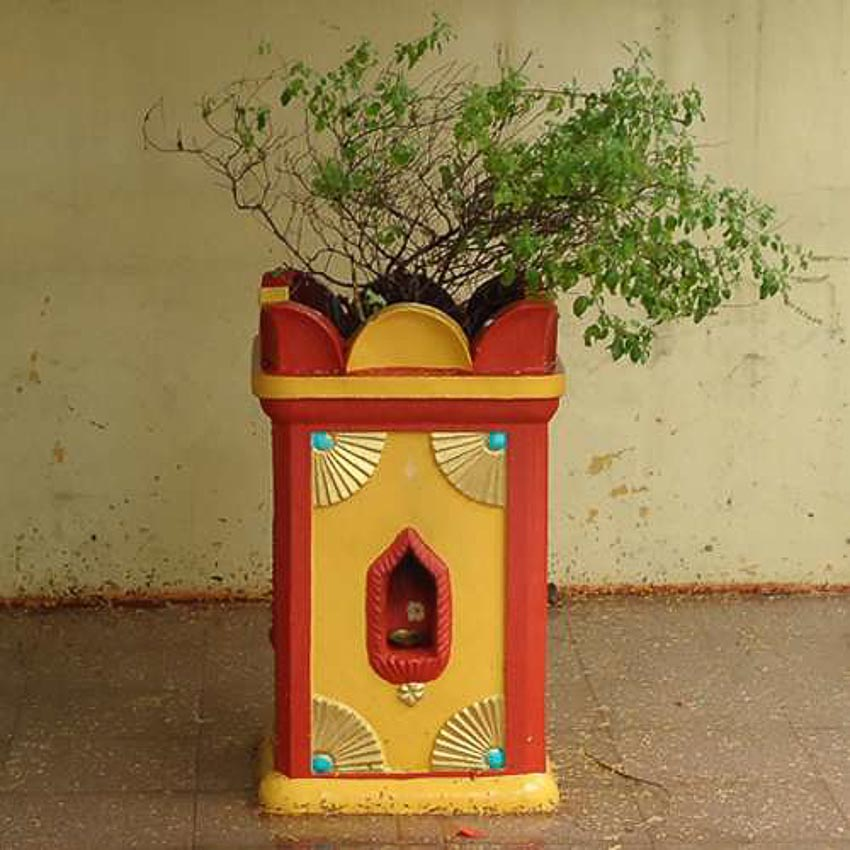 Húng quế - cây thiêng của Ân giáo - 7