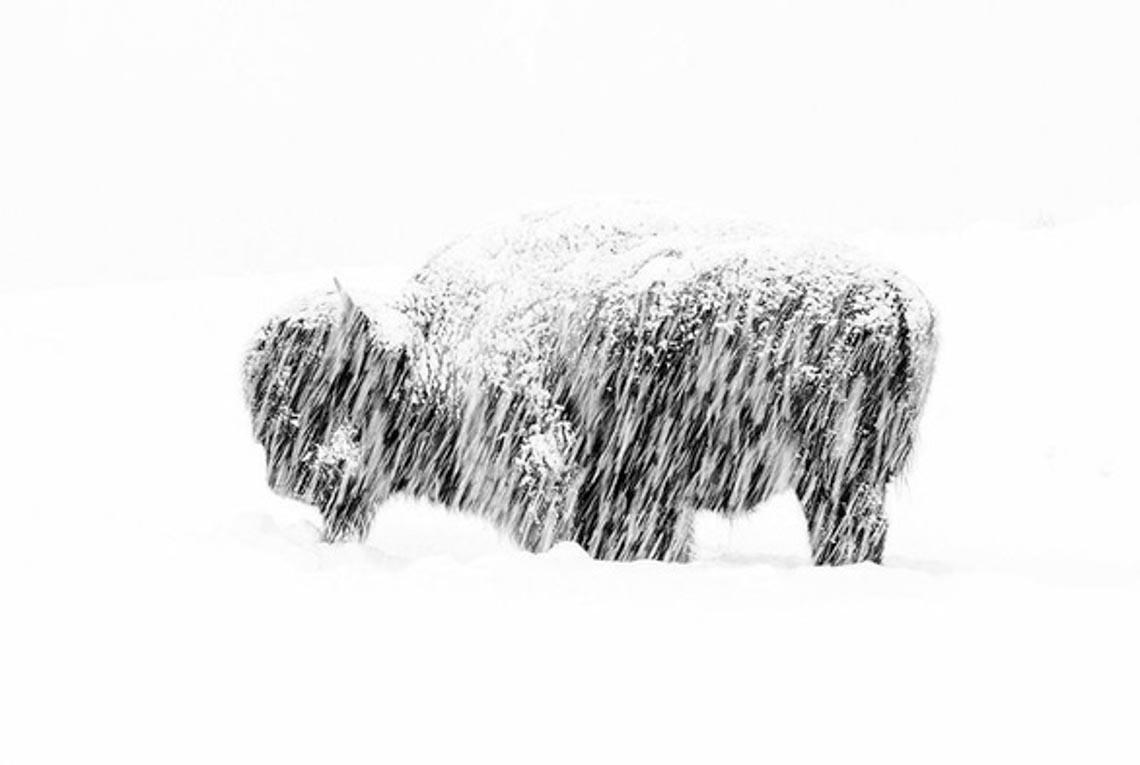 """""""Sóc chết đứng khi thấy cáo"""" thắng giải Nhiếp ảnh gia động vật hoang dã 2019 - 8"""