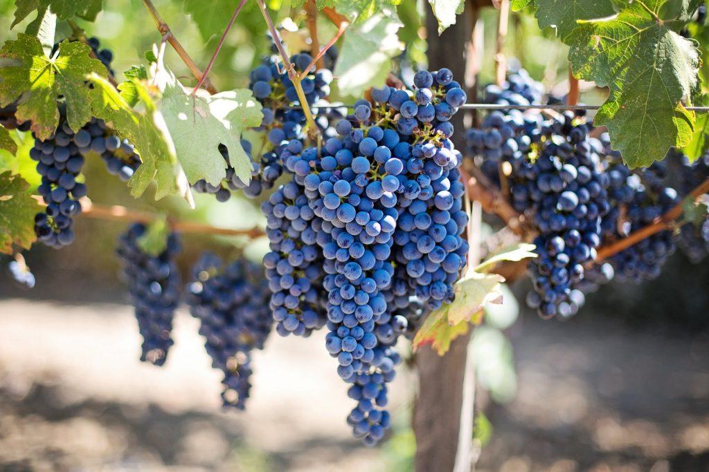Rượu vang với sức khỏe và vẻ đẹp - 5