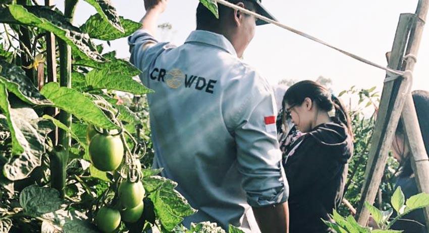 Crowde: Startup Indonesia thiết lập cơ sở hạ tầng mới cho ngành nông nghiệp -1