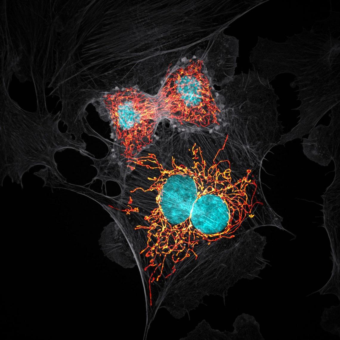 Ngỡ ngàng vẻ đẹp của phôi thai rùa, cá sấu dưới kính hiển vi-10