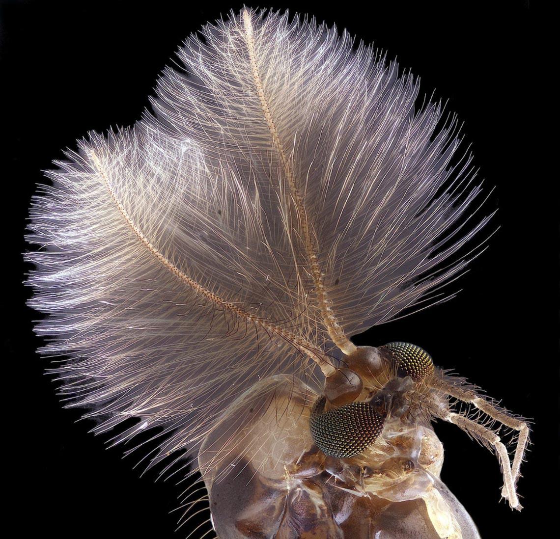 Ngỡ ngàng vẻ đẹp của phôi thai rùa, cá sấu dưới kính hiển vi-4