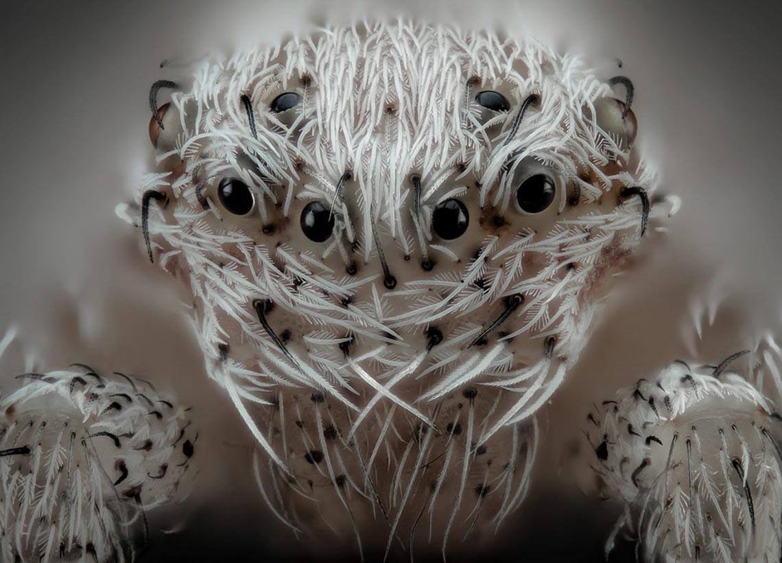 Ngỡ ngàng vẻ đẹp của phôi thai rùa, cá sấu dưới kính hiển vi-6