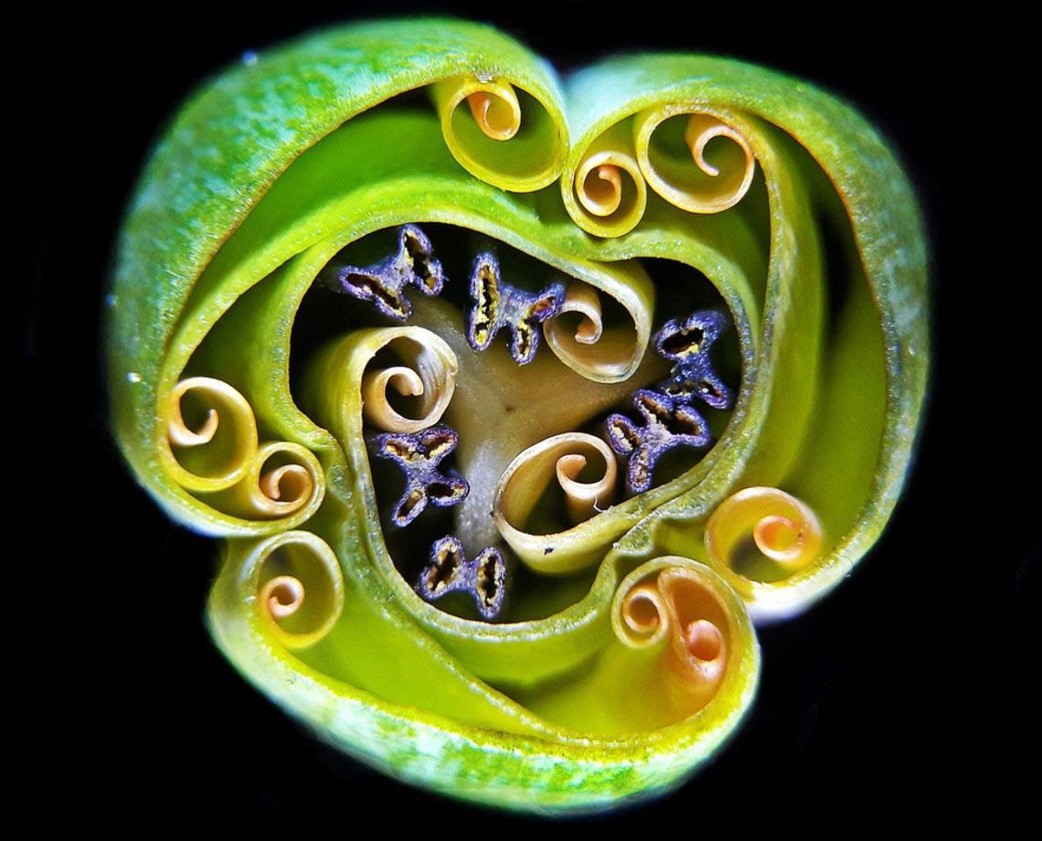 Ngỡ ngàng vẻ đẹp của phôi thai rùa, cá sấu dưới kính hiển vi-9