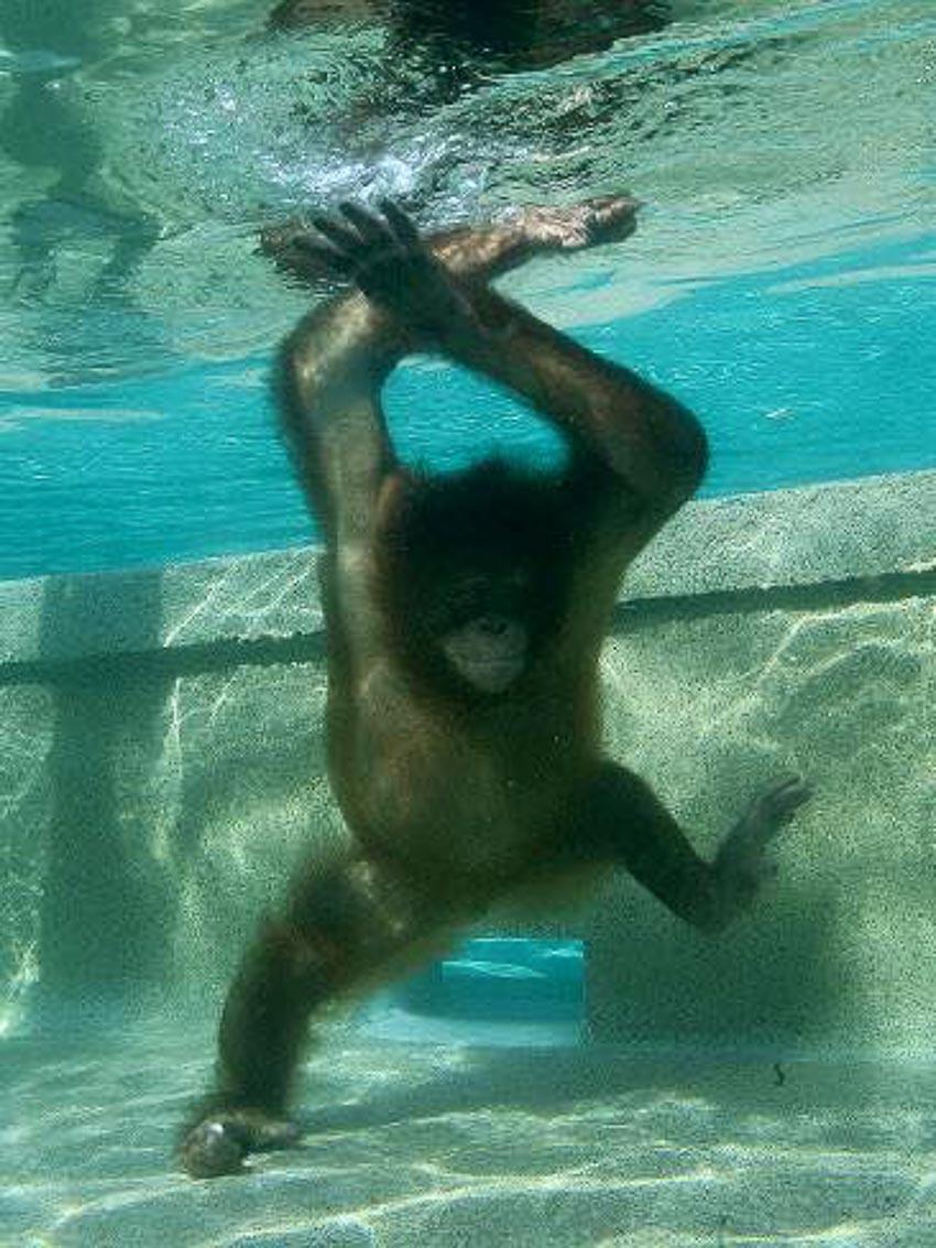 """""""Vận động viên"""" bơi lặn-1"""
