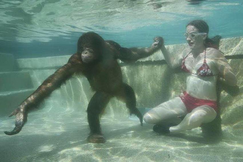 """""""Vận động viên"""" bơi lặn-2"""