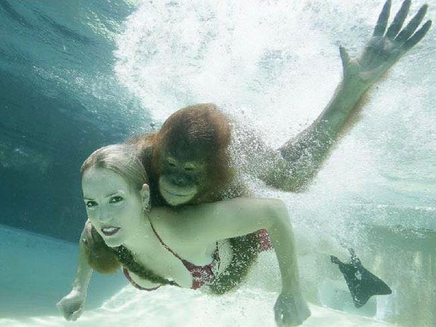 """""""Vận động viên"""" bơi lặn-4"""