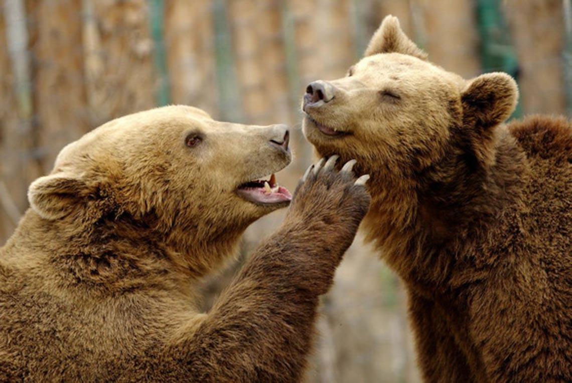 Động vật hôn nhau bày tỏ yêu thương ngọt ngào hơn cả người -13