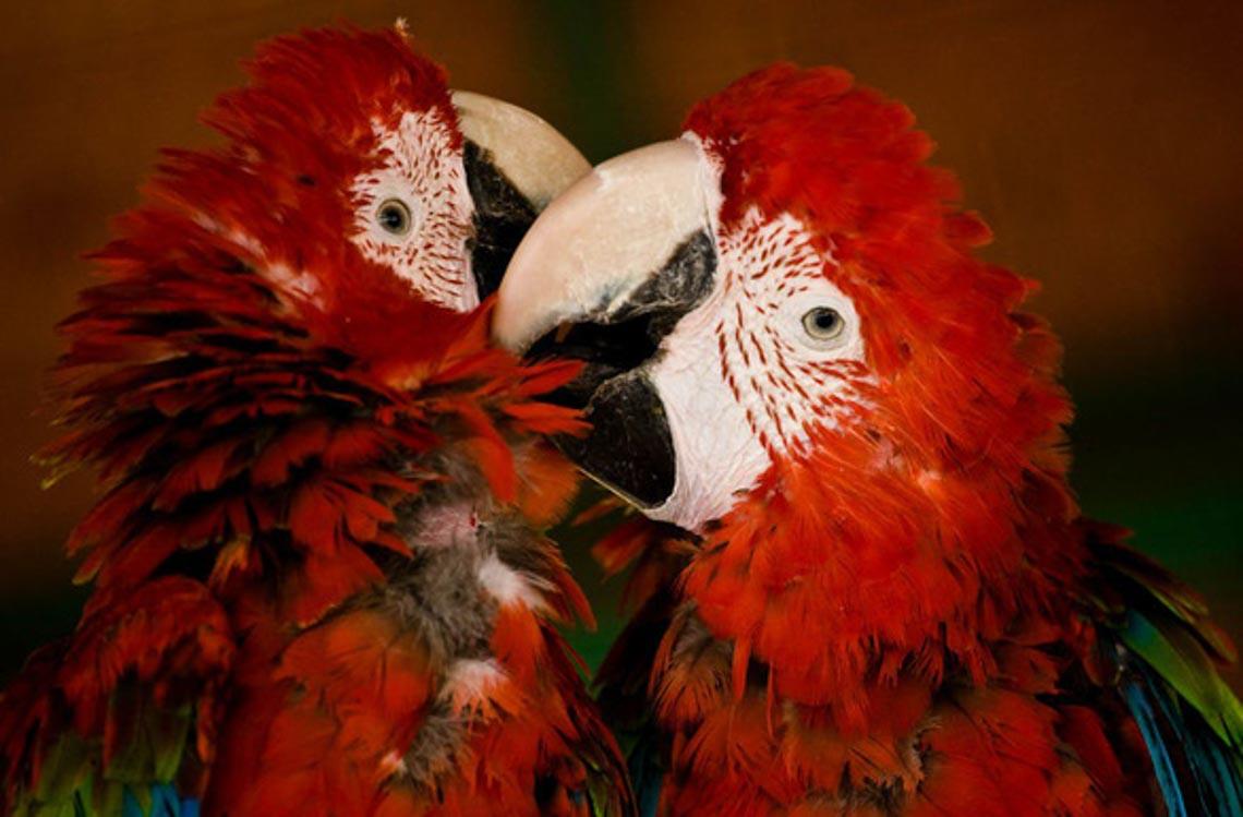 Động vật hôn nhau bày tỏ yêu thương ngọt ngào hơn cả người -16