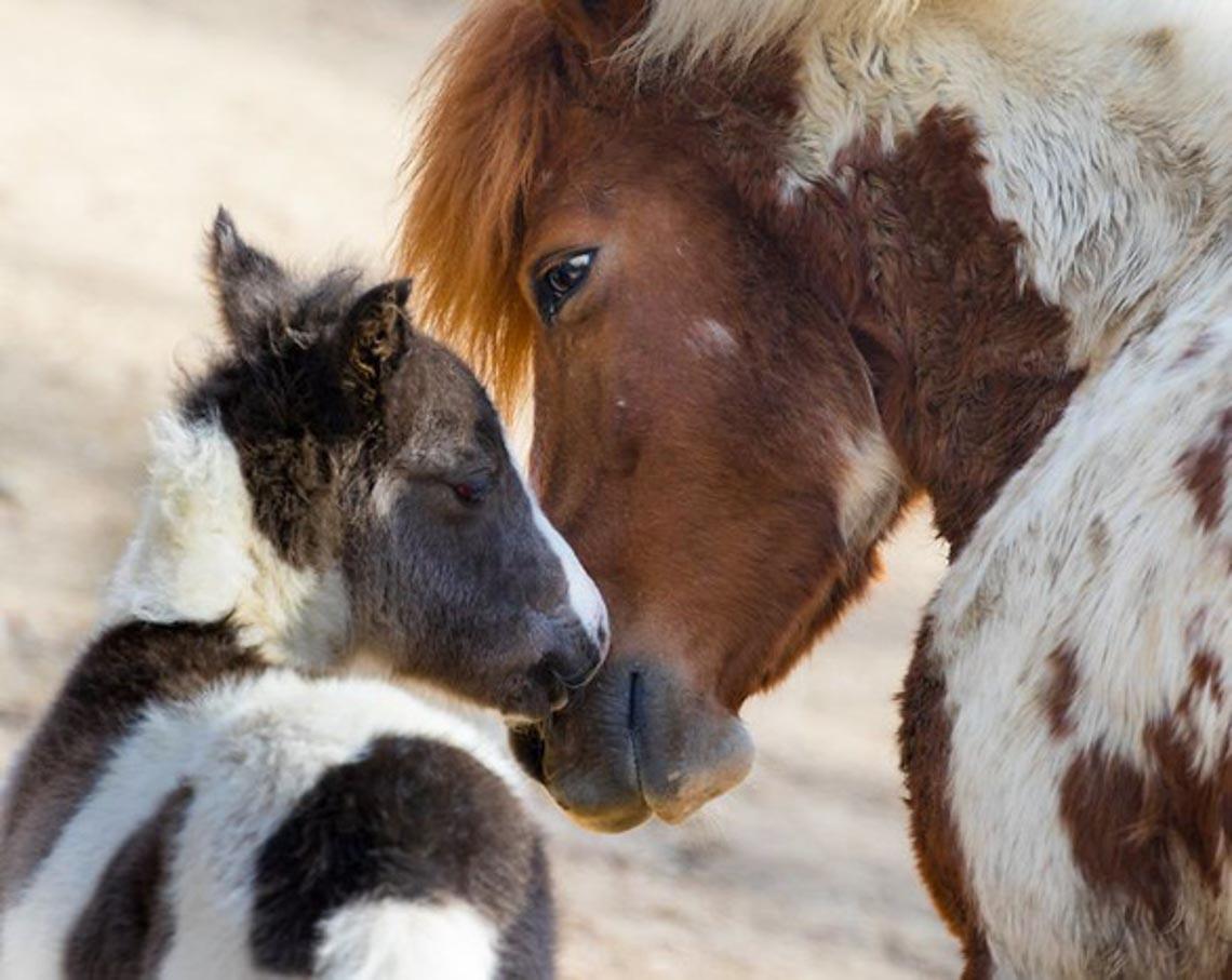 Động vật hôn nhau bày tỏ yêu thương ngọt ngào hơn cả người -4