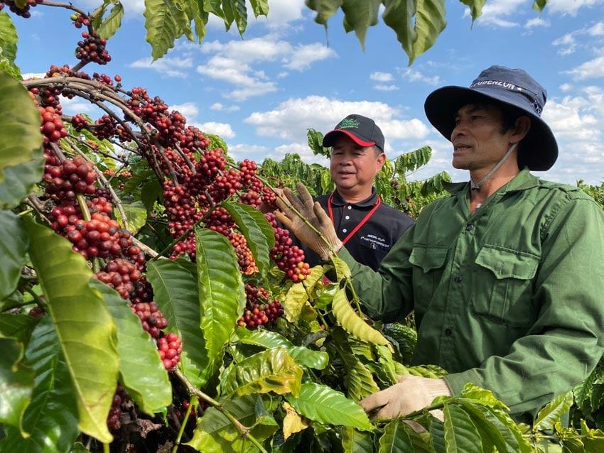10 năm gắn kết cùng nông dân nâng cao chất lượng cà phê Việt Nam -1