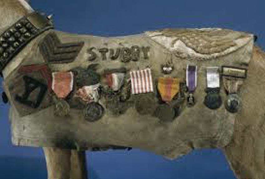 Huân chương cho quân khuyển Stubby -6