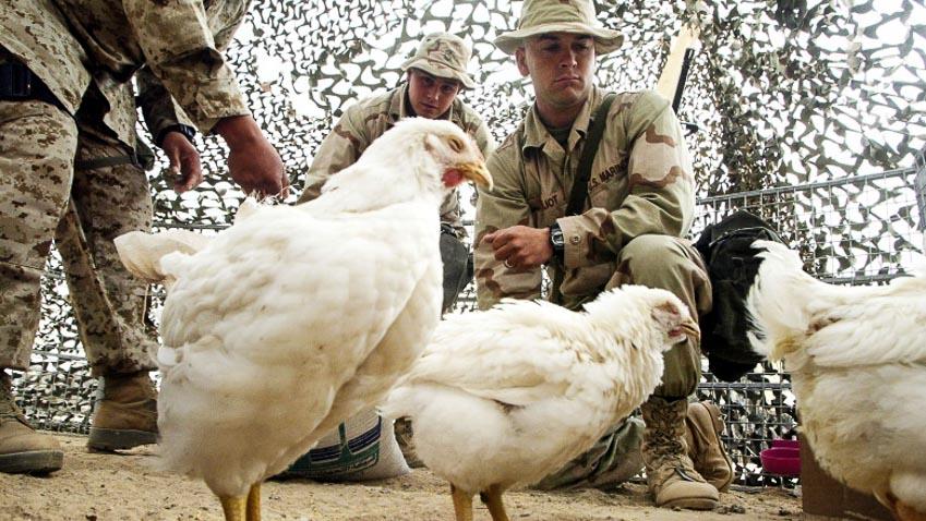 Khi động vật trở thành quân tiên phong trên chiến trường - 7