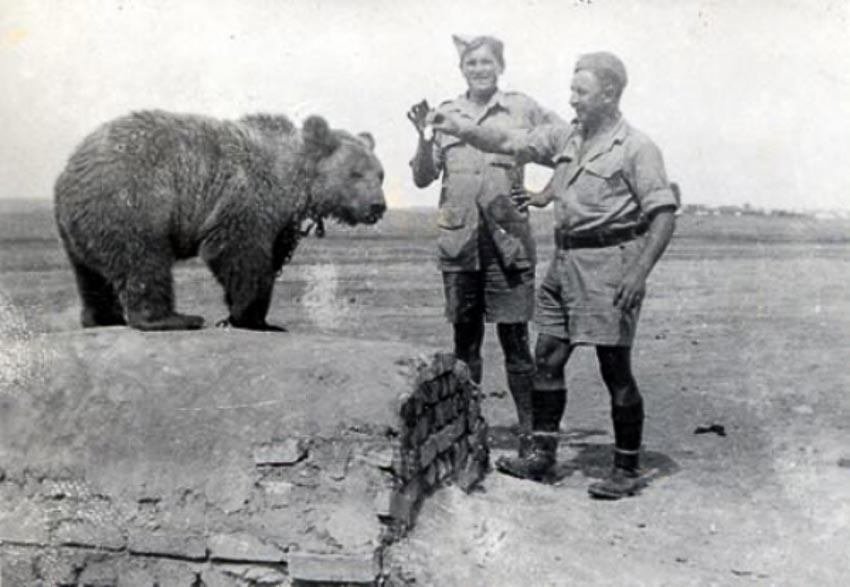 Khi động vật trở thành quân tiên phong trên chiến trường - 9