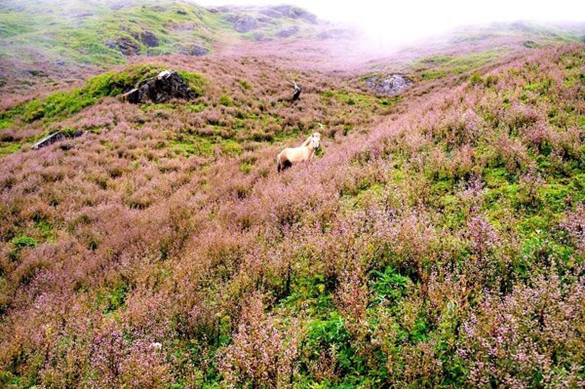 Lên Yên Bái ngắm cánh đồng hoa dưới chân mây -3