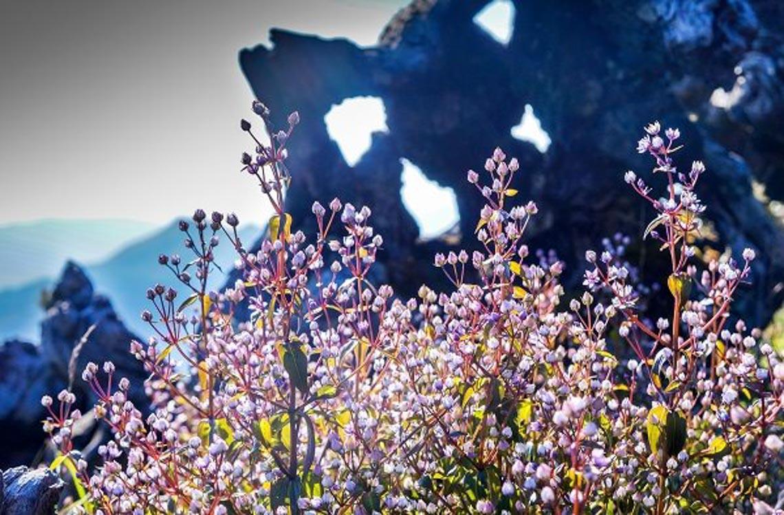 Lên Yên Bái ngắm cánh đồng hoa dưới chân mây -4